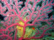 CoralAug06-009