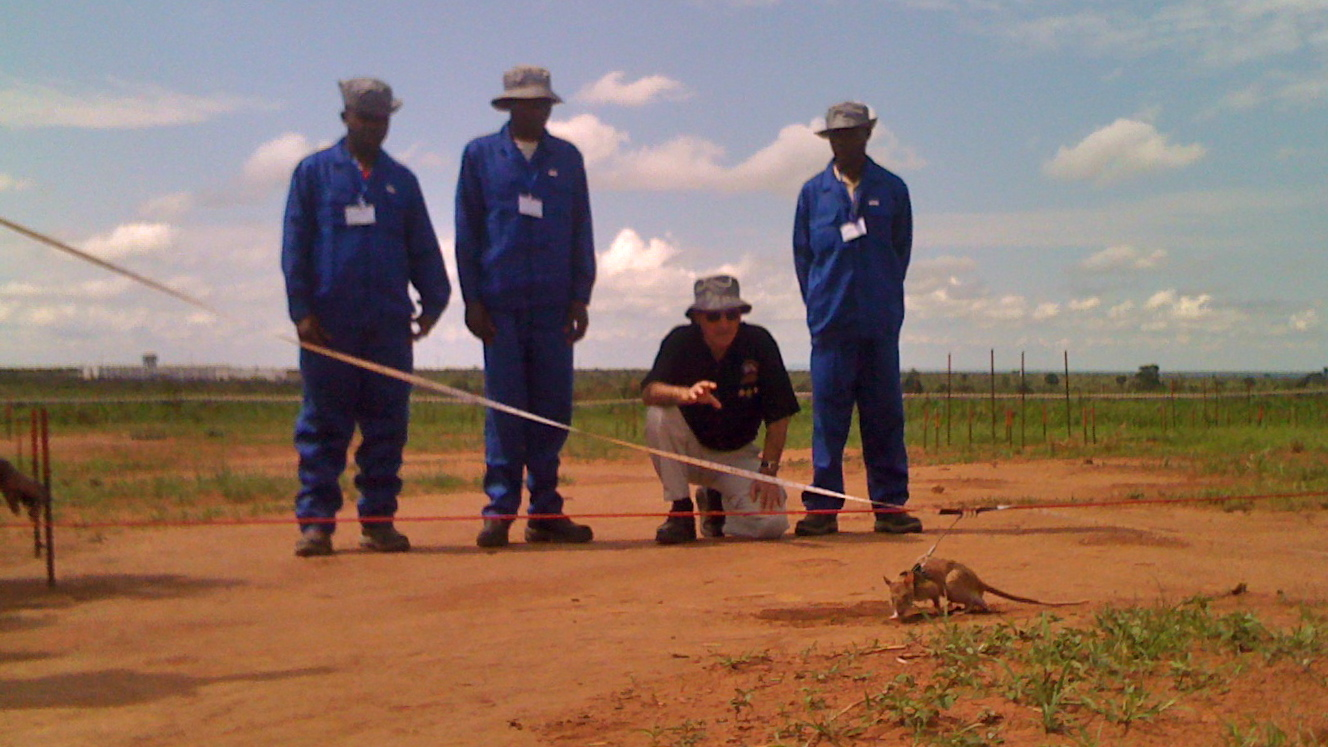 Roger Abrantes in Angola instructing the handlers of Apopo's landmine detecting rats.