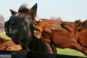 HorsePacifyingBehavior