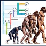 Evolution Course