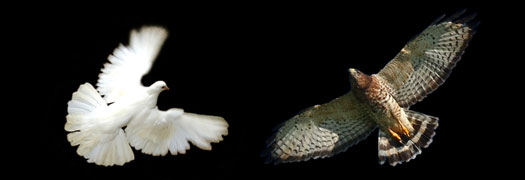Evolutionary strategies – Evolutionarily Stable Strategies (Doves Hawks)
