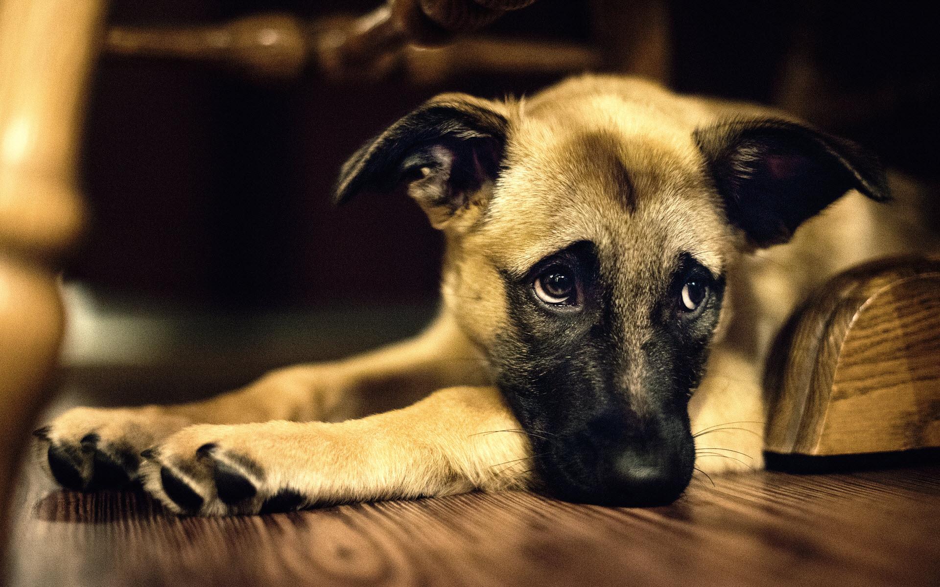 Can My Dog Be Happy Or Sad Ethology Institute Cambridge