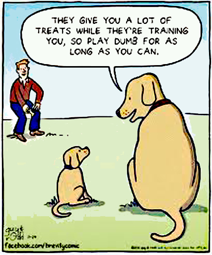 Treat Training Dog Cartoon