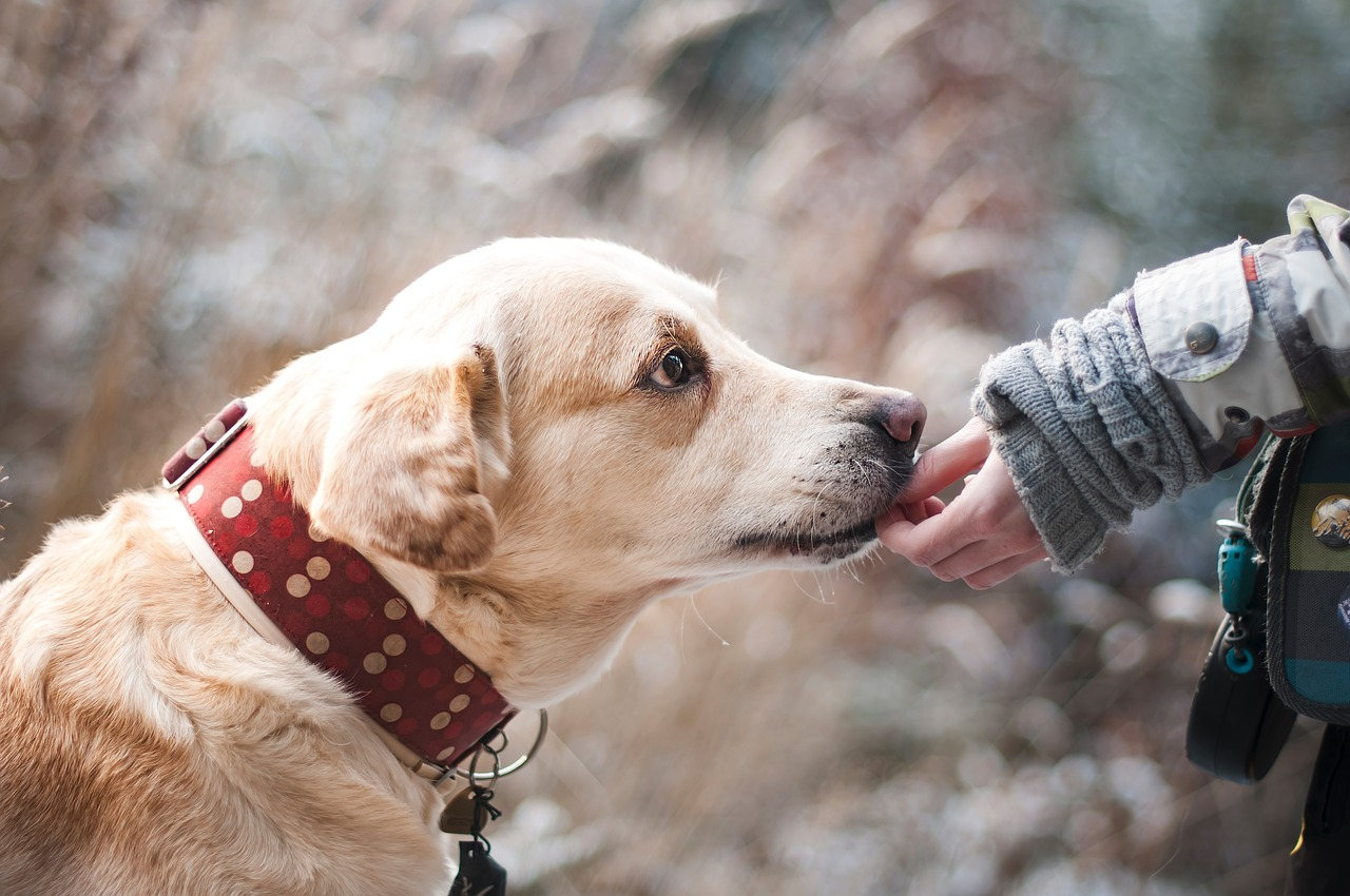 Bonding With Your Dog – Friendship With Your Dog.