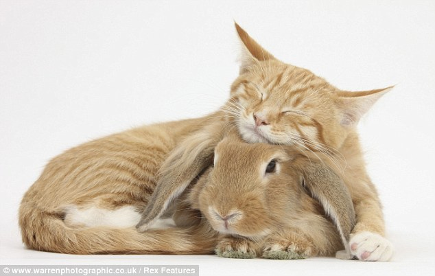Cat and rabbit (photo by Mark Taylor).