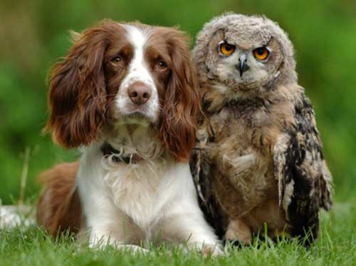 Cocker Spaniel And Owl.