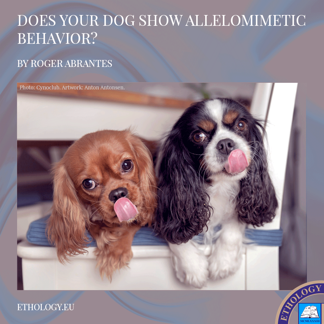 Does Your Dog Show Allelomimetic Behavior?