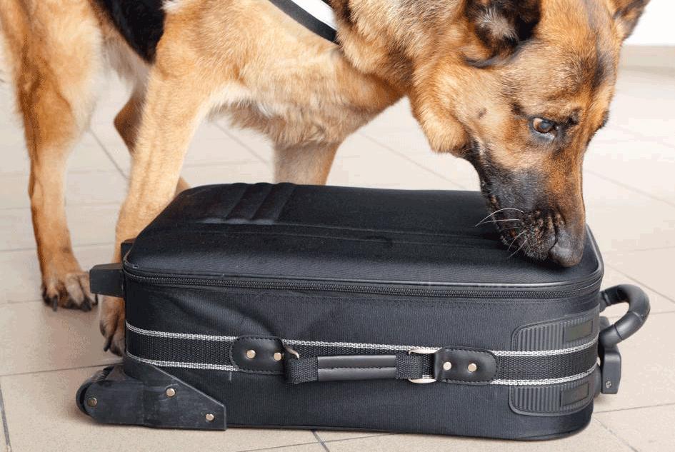 Dog Sniffing Bag