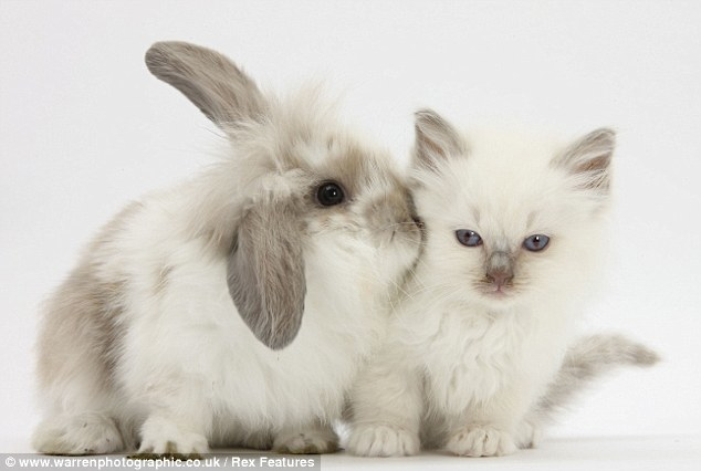 Rabbit and kitten (photo by Mark Taylor).