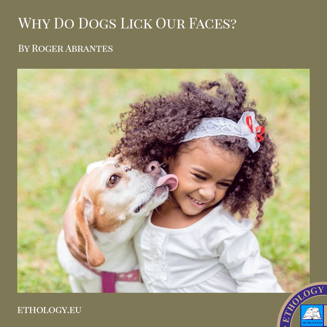 Why Do Dogs Lick Our Faces?