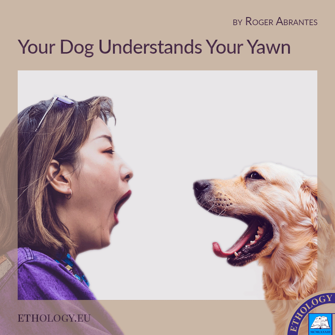 Your Dog Understands Your Yawn