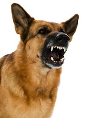 Where Can I Take My Aggressive Dog