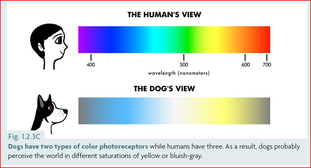 The Dog S Color Vision And What It Means For Our Training