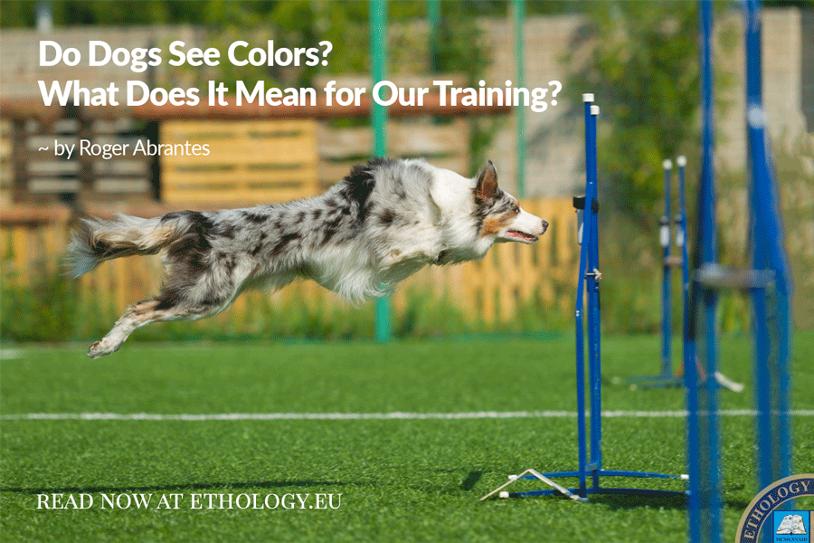 Do Dogs See Colors?