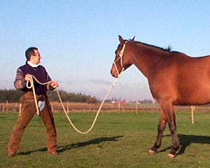 Roger Abrantes Horse Stand (Small)