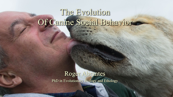 Evolution of Canine Social Behavior —Talk and seminar