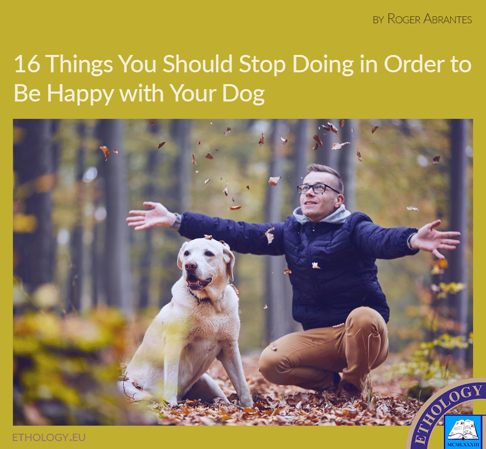 16 Things You Should Stop Doing in Order to Be Happy with Your Dog
