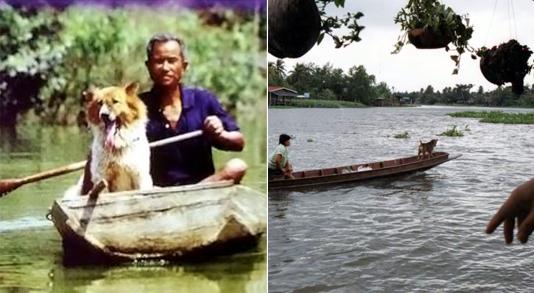 thaiboatdog1