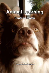 """Animal Learning"" by Roger Abrantes."