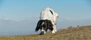 DogSniffing-JoyOfLiving