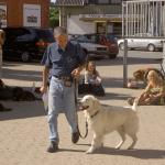 Canine Advanced PV