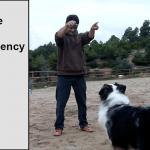 Canine Basic PV