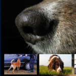 Canine Scent Detection