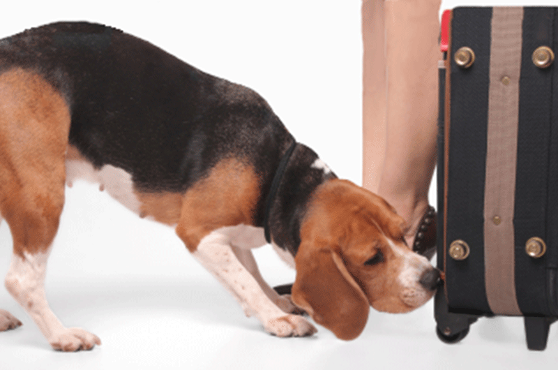 Canine Scent Detection Course