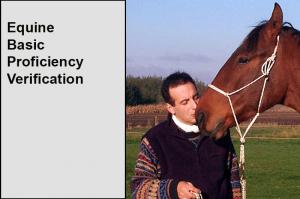Equine Basic PV