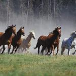 Equine Behavior Course