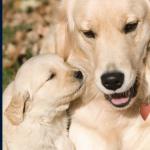 Animal Welfare Course