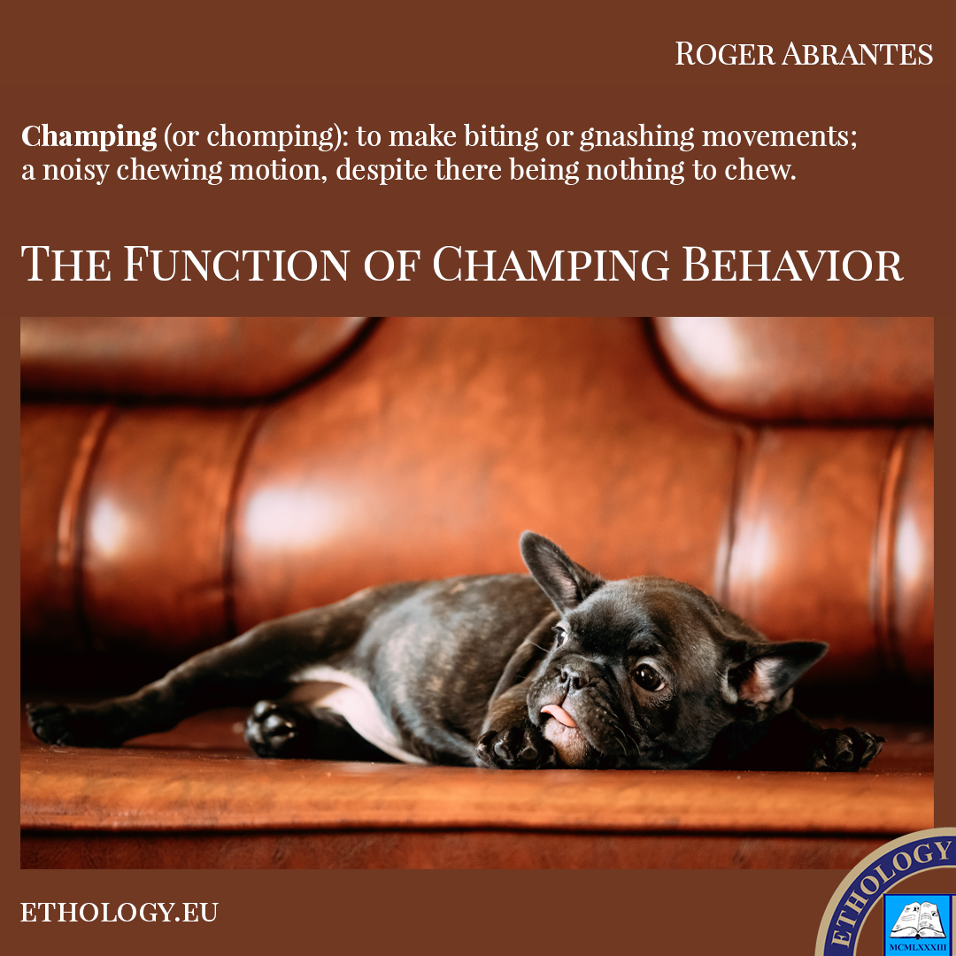 The Function of Champing Behavior
