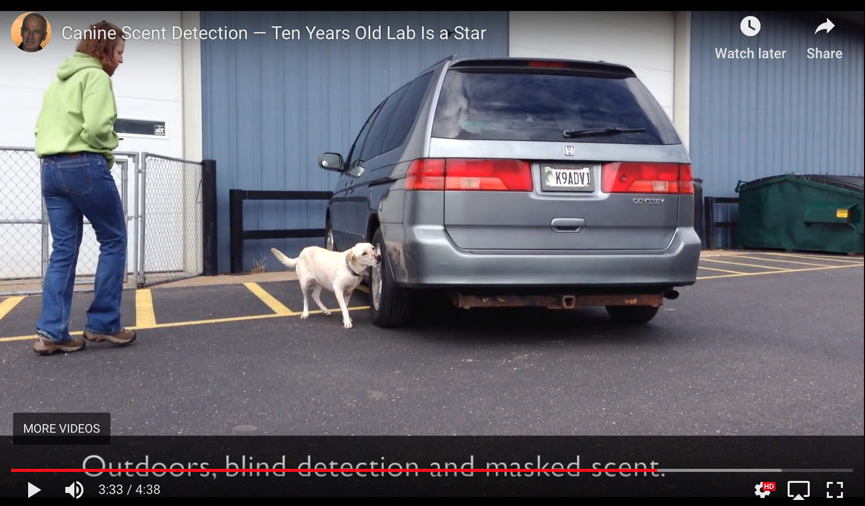 Canine Scent Detection — Ten Years Old Lab Is a Star