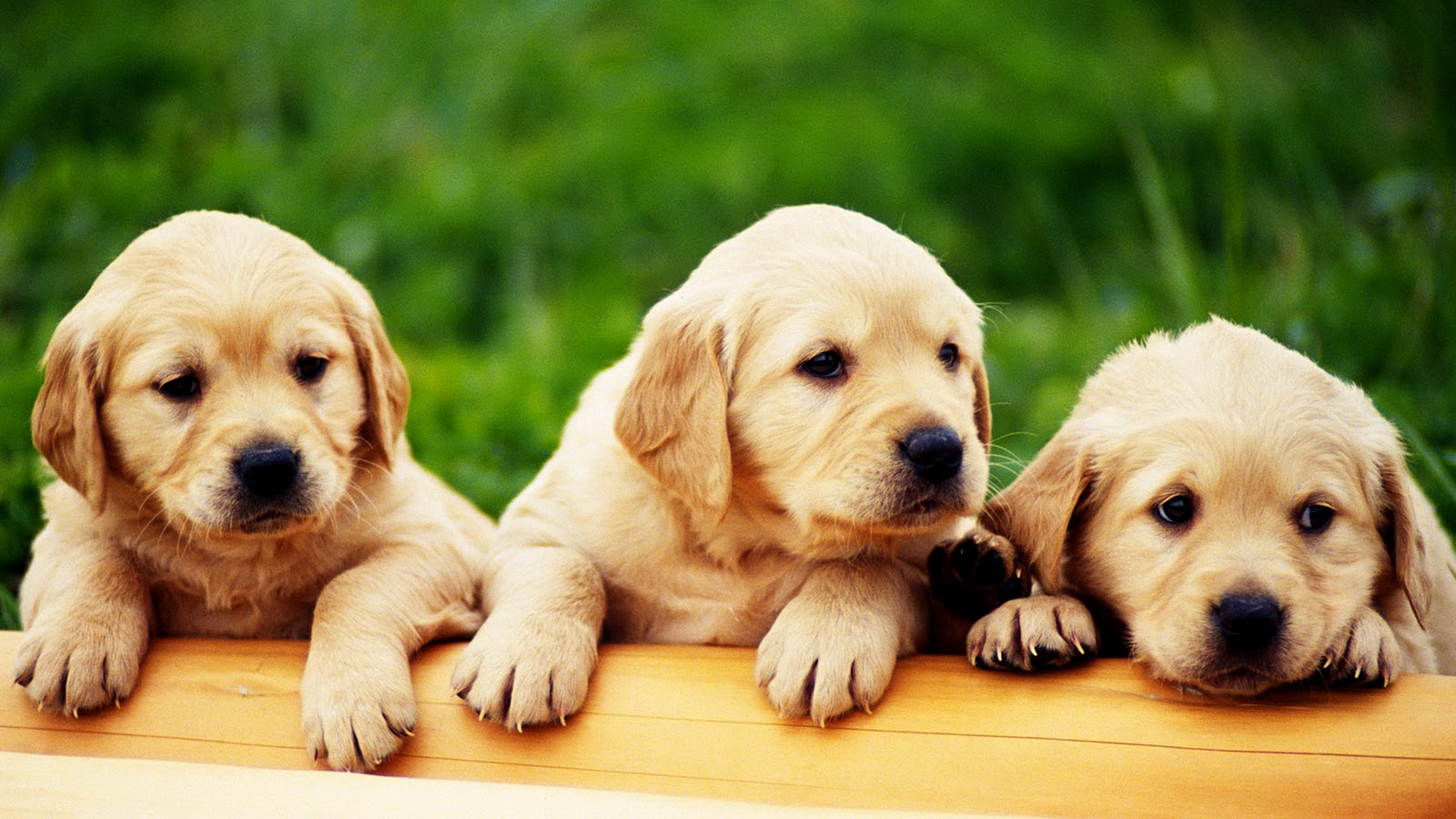 All About Puppies