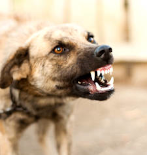 DogAggression8-Petexpertise-com