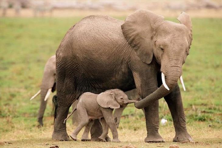 ElephandAndBaby