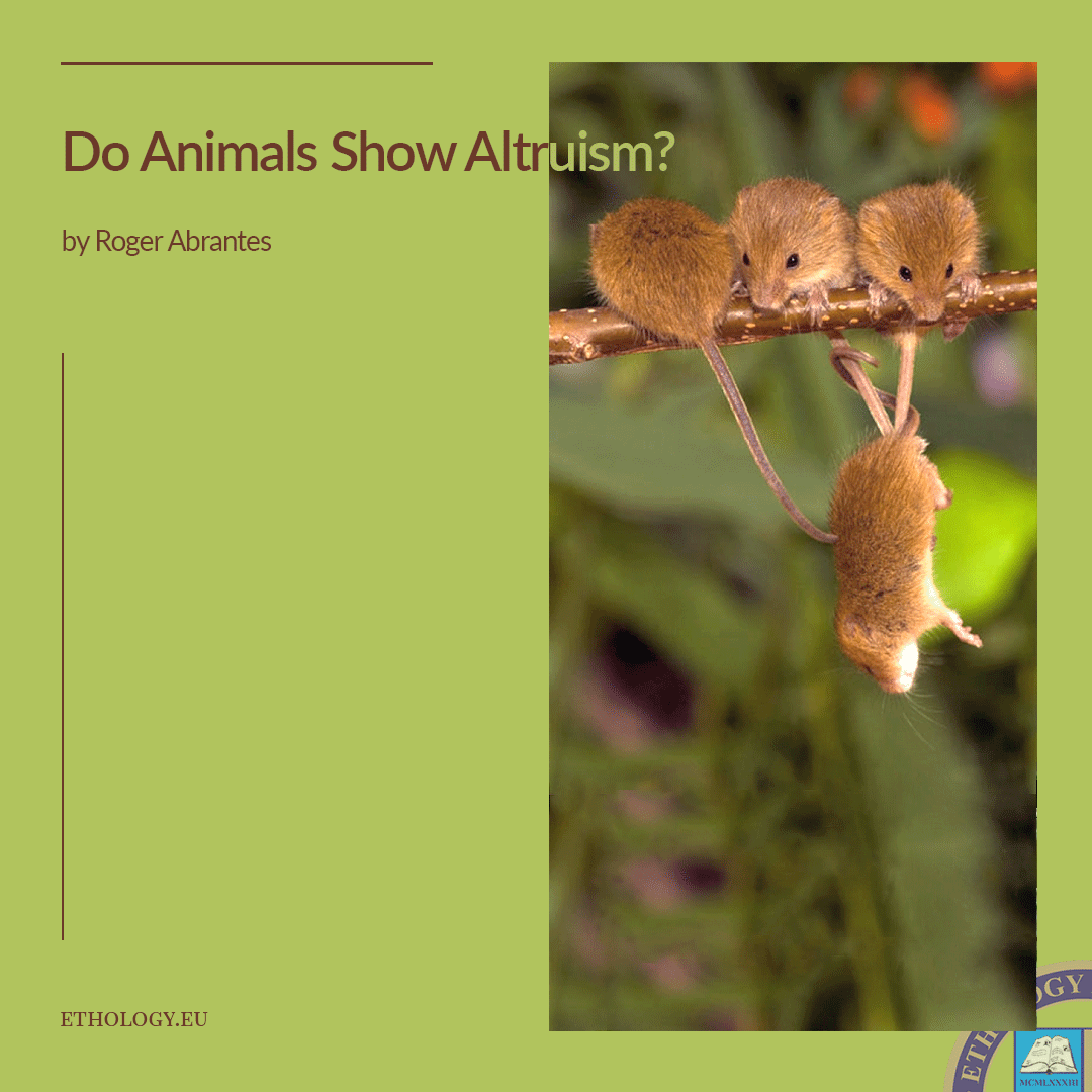 Do Animals Show Altruism?