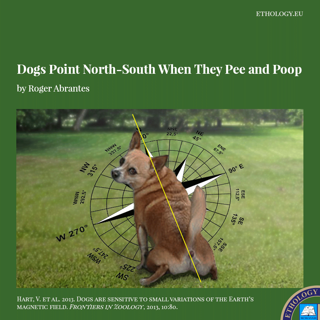 Dogs Point North-South