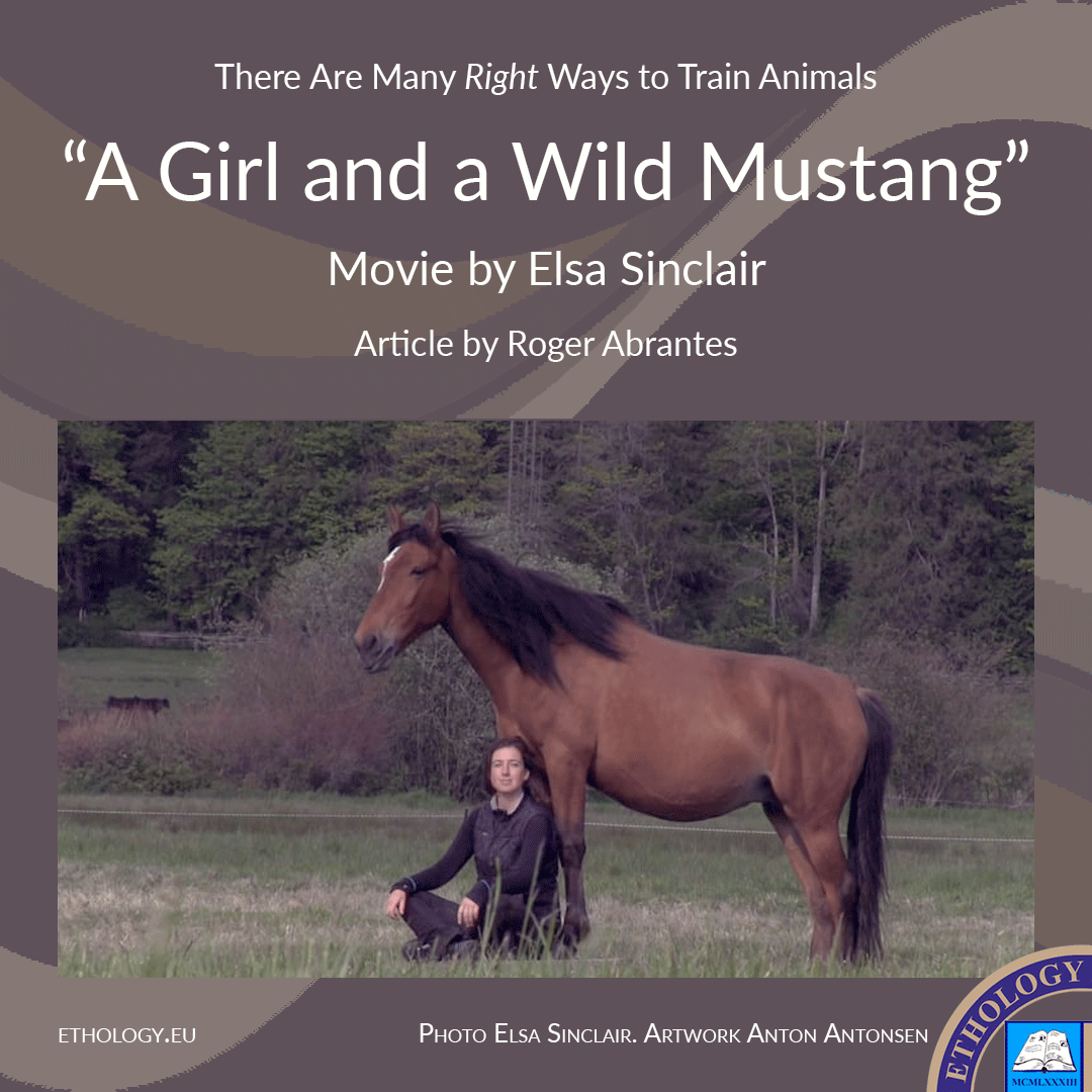 "A Girl and a Wild Mustang—or ""There Are Many 'Right' Ways to Train Animals"""