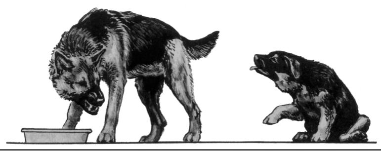 Canine Twist-Movement